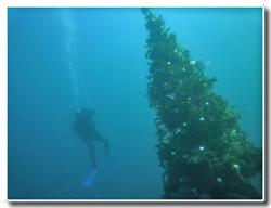 ダイバーとクリスマスツリー