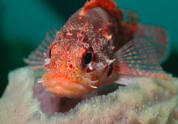 PADI AWARE魚の見分け方スペシャルティ講習