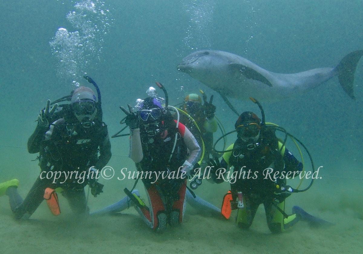 イルカとダイビング、カメにも会えました