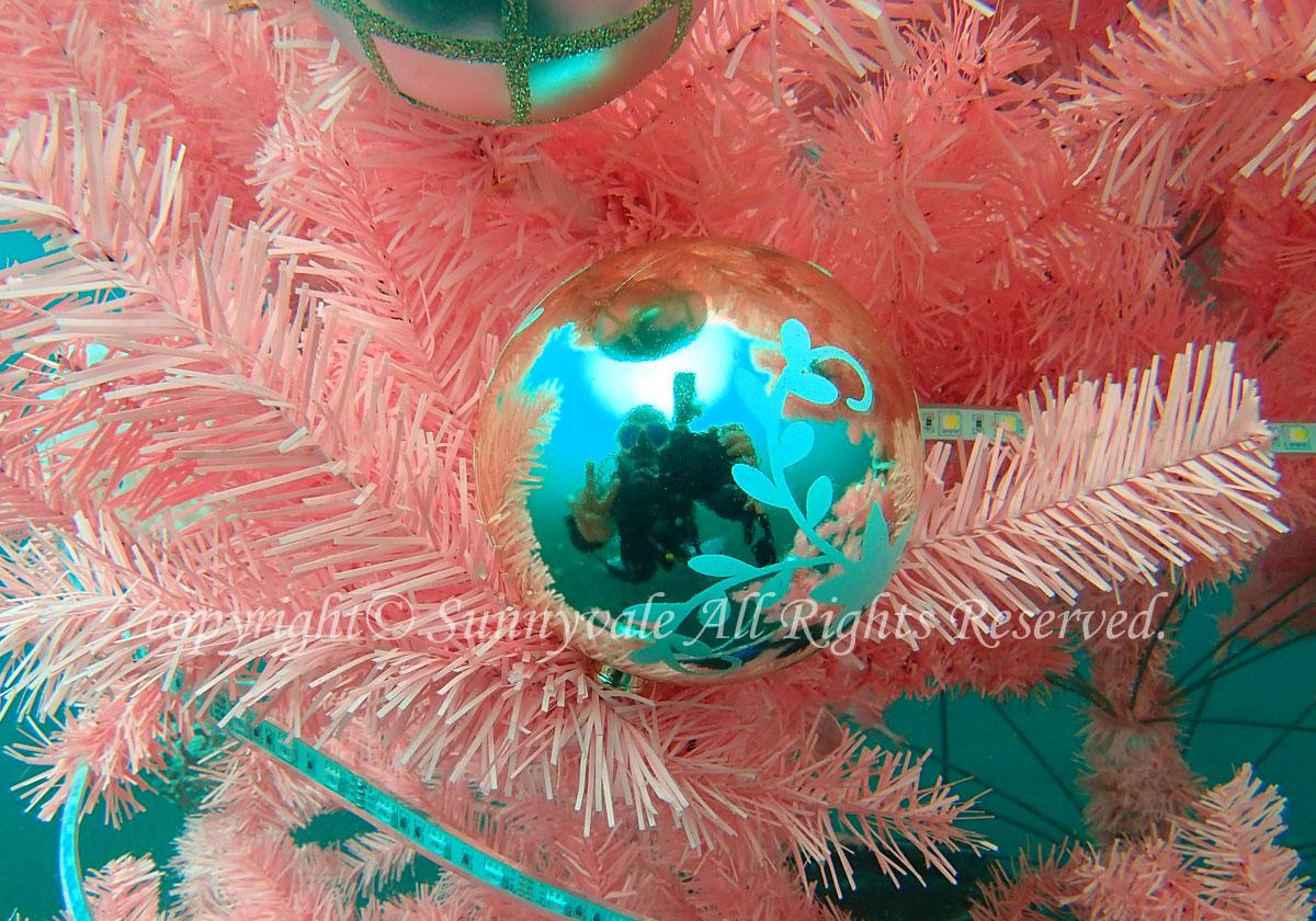 スタッフお勉強で大瀬崎、クリスマスツリーも入りました