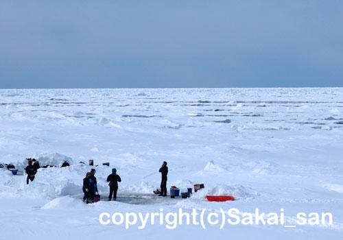 「流氷ダイビング」 のみやさん撮影