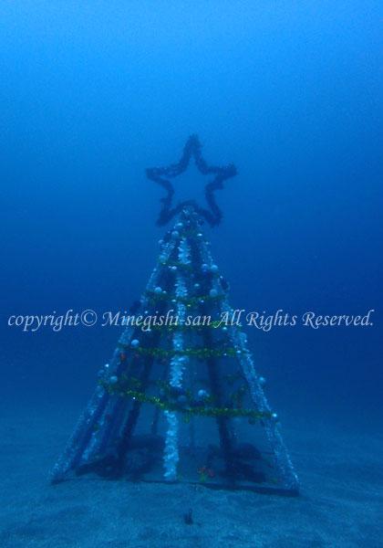 「水中クリスマスツリー」 みねぎしさん