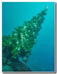 陸上も水中も、メリークリスマス♪