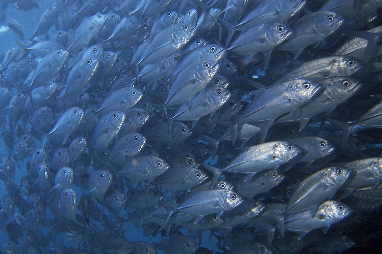 海水魚図鑑