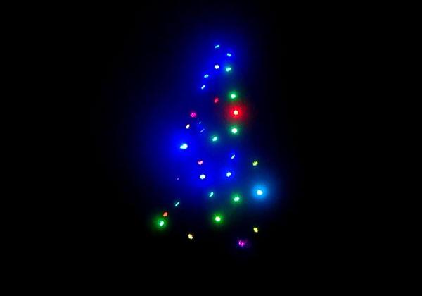 ナイトダイビングでクリスマスツリー