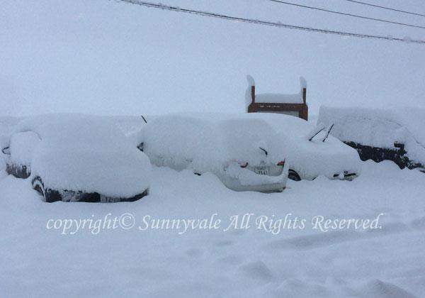 雪でレンタカーが・・・
