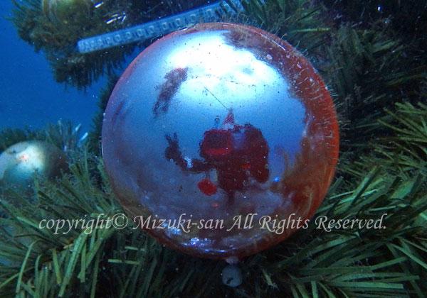 「水中クリスマスツリー」 みづきさん