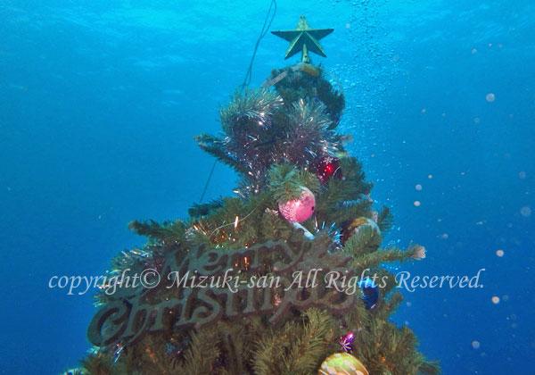 「水中クリスマスツリー」 のりこさん
